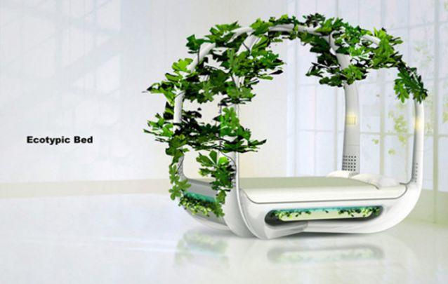 Cama Ecotípica