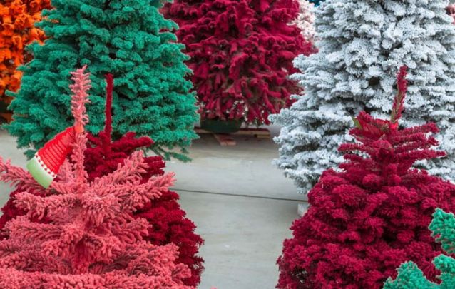 Pinheiros coloridos