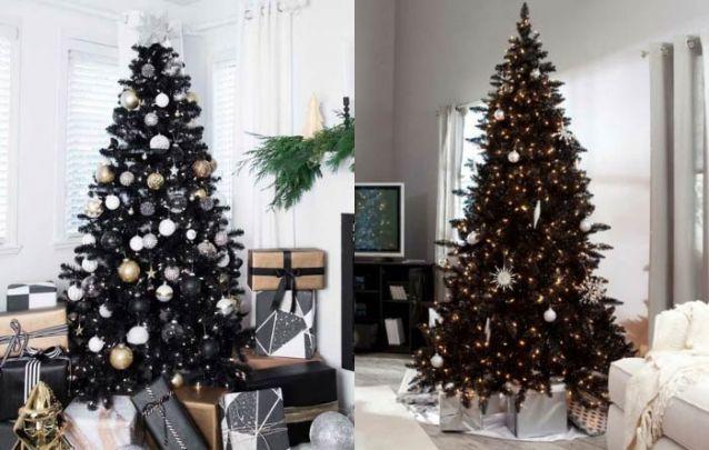 Mais uma prova de pinheiros pretos são um luxo!