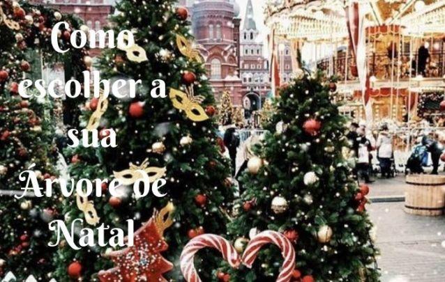 Como Escolher a sua Árvore de Natal